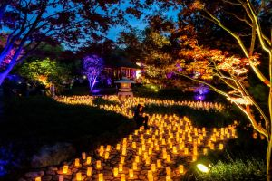Canberra Nara Candle Festival - Accommodation Australia